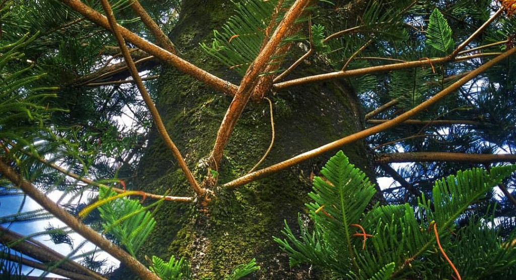Pine Pop Quiz