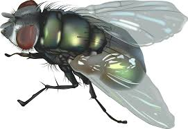 противные мухи