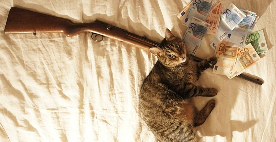 cashcats3