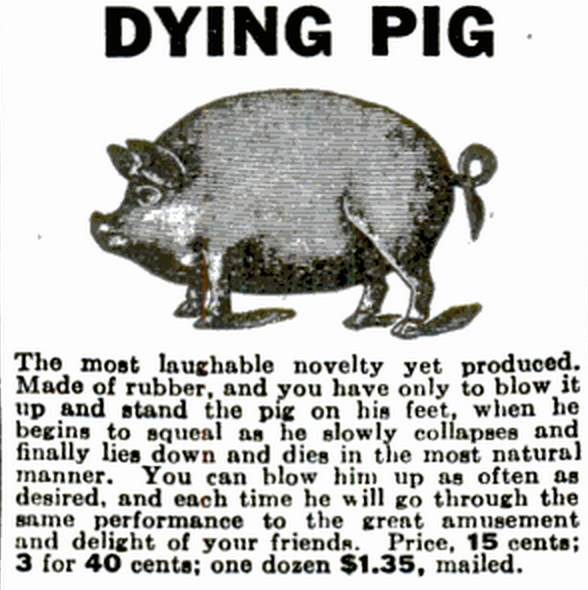 dying-pig