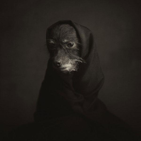 12_Animal_Portraits__vincent_Lagrange_yatzer