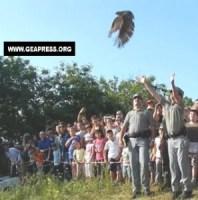 Lotta alle tagliole, rapaci liberi: un Ferragosto dedicato agli animali