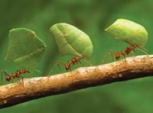ants_crop