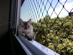 gato-saia-de-casa-1