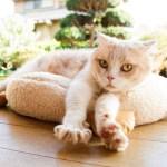 シナモン(タレント猫)の性別や年齢は?飼い主や画像もチェック!