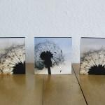 Hanna Kocanis Bilder