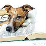 dog-reading-books-23266795