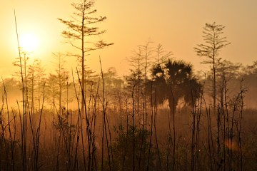 Sunrise over the Cypress Swamps in the Everglades National Park, Florida.
