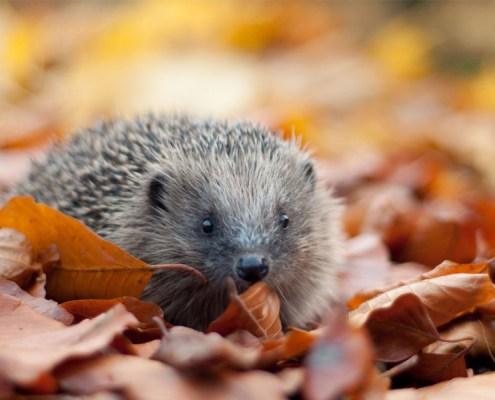 Help-UK-Wildlife
