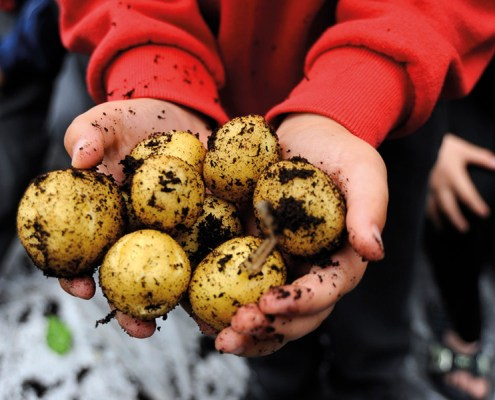 grow-your-own-potatoes
