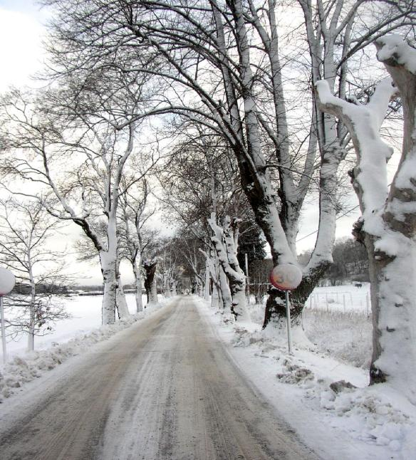 Fight Winter SAD: Facts to Beat Winter Blues