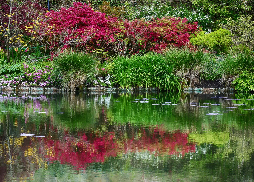 Reflections in Monet's water lily garden