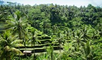Subak irrigation system in the rice fields in Bali is a UNESCO World Heritage Site