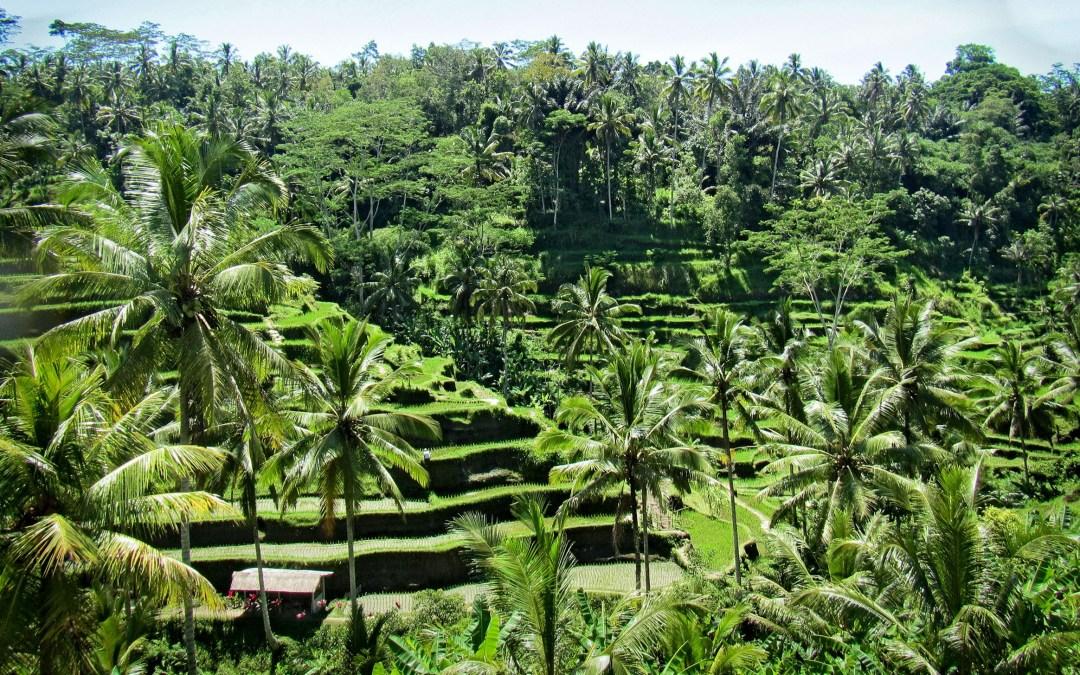A Weekend in Bali