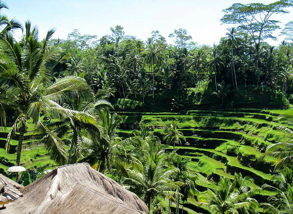The Subak irrigation system in the rice fields in Bali is a UNESCO World Heritage Site