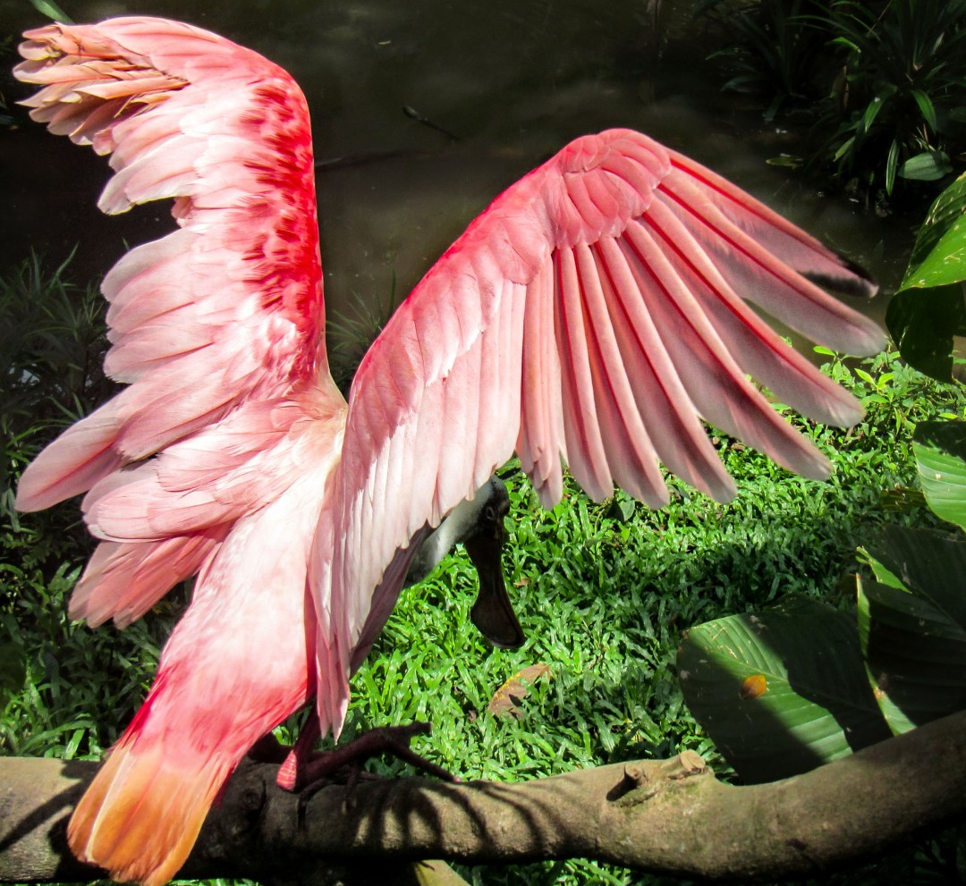 Flamingo You Can Fly for solo travel on boomervoice