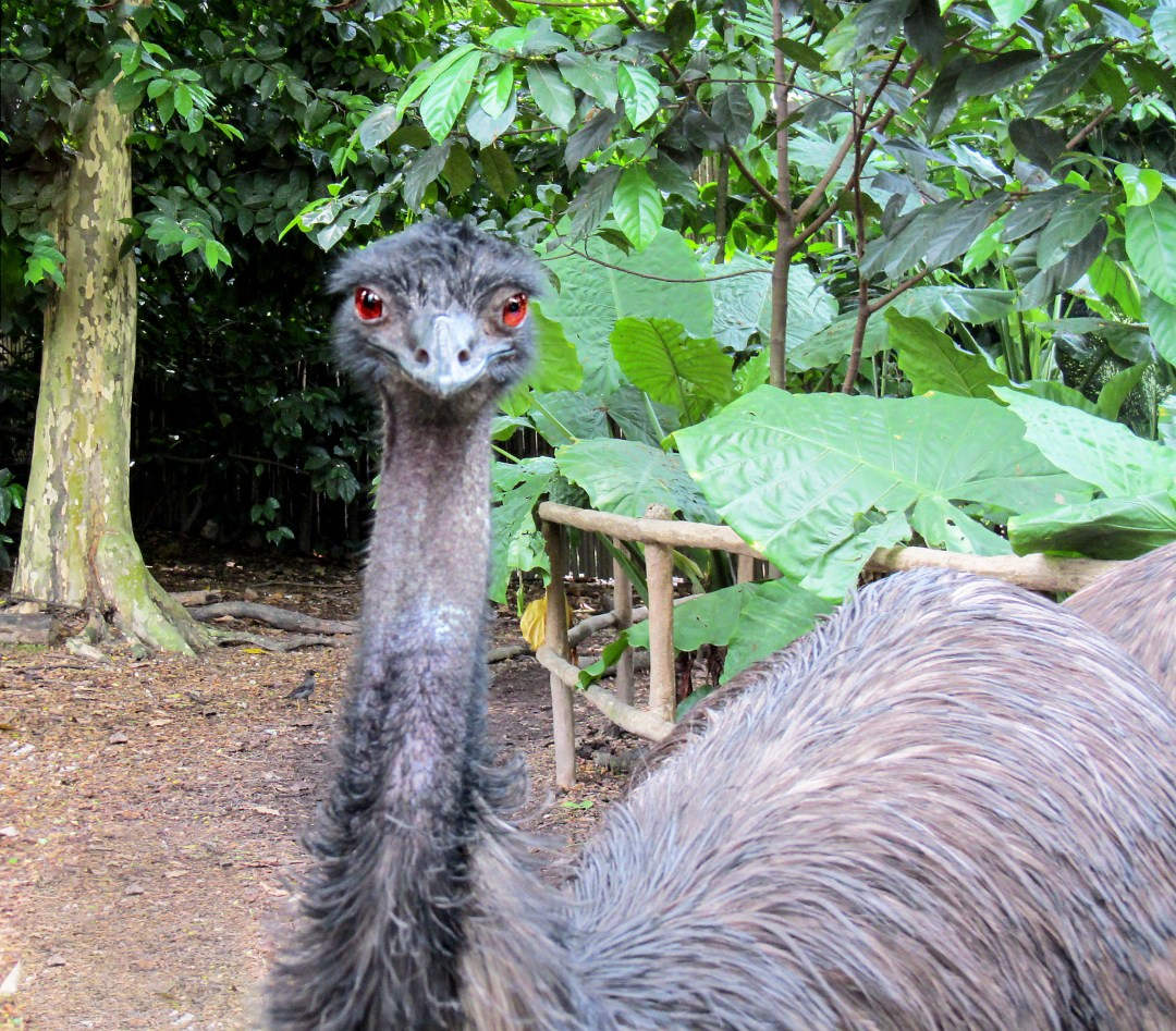 Ostrich eyes for Benefits of solo travel on boomervoice