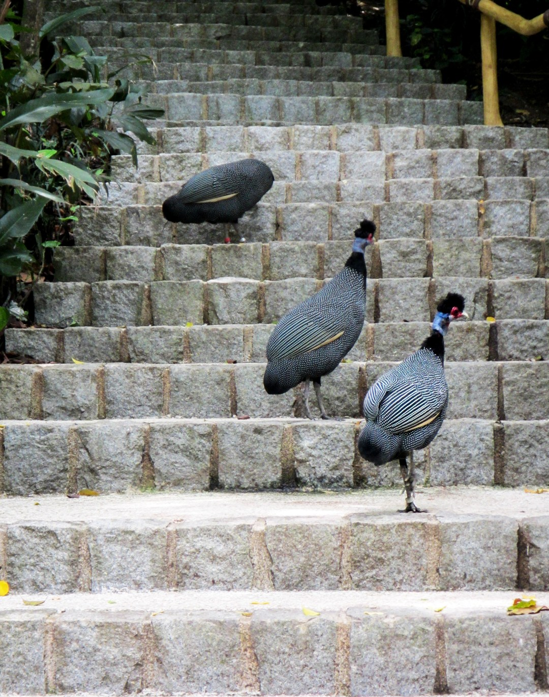 Pigeons on stairs for Benefits of solo travel on boomervoice