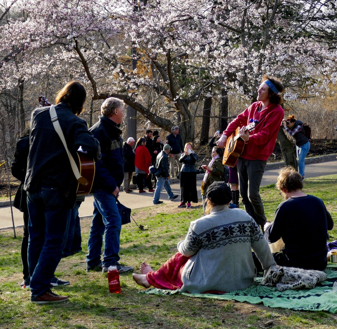 Guitar player in High Park for cherry blossom festival for boomervoice