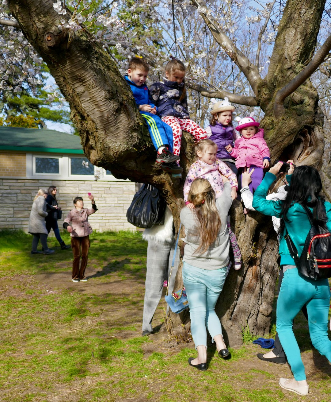 Kids in cherry tree in High Park for boomervoice