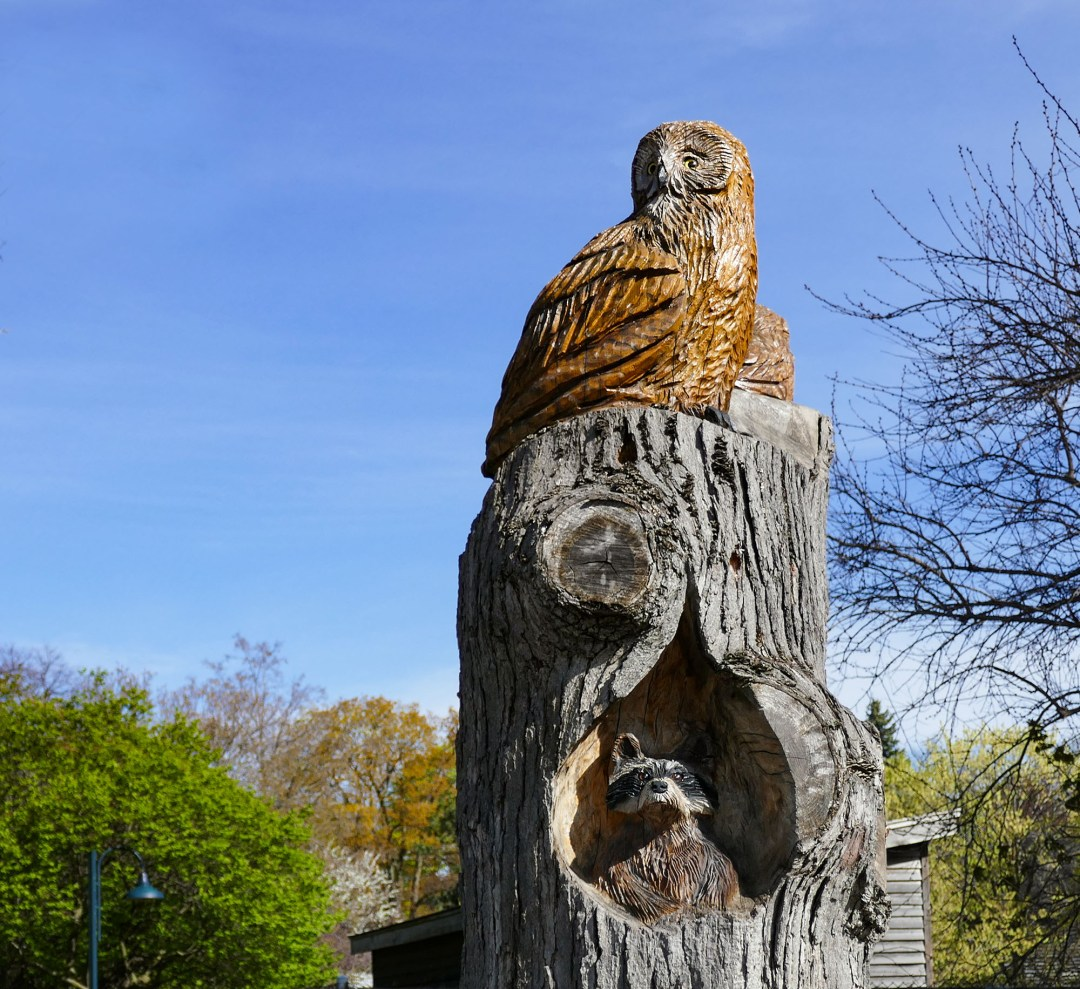 Wise owl in Riverdale Park for boomervoice