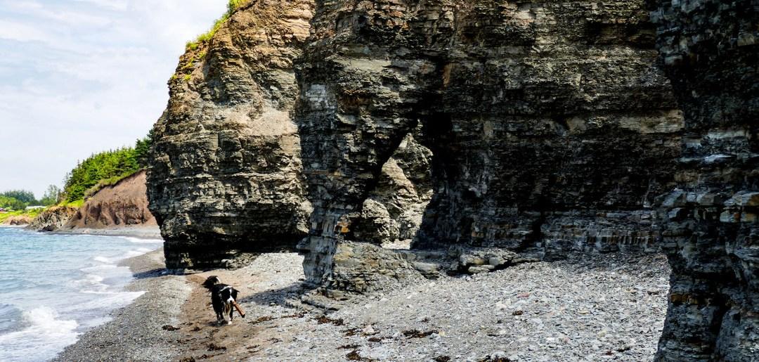 Dog on beach at Arisaig Provincial Park for boomervoice