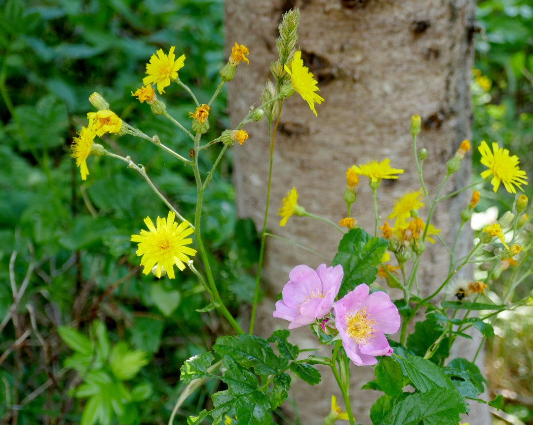 Pink and yellow in Arisaig Provincial Park for boomervoice