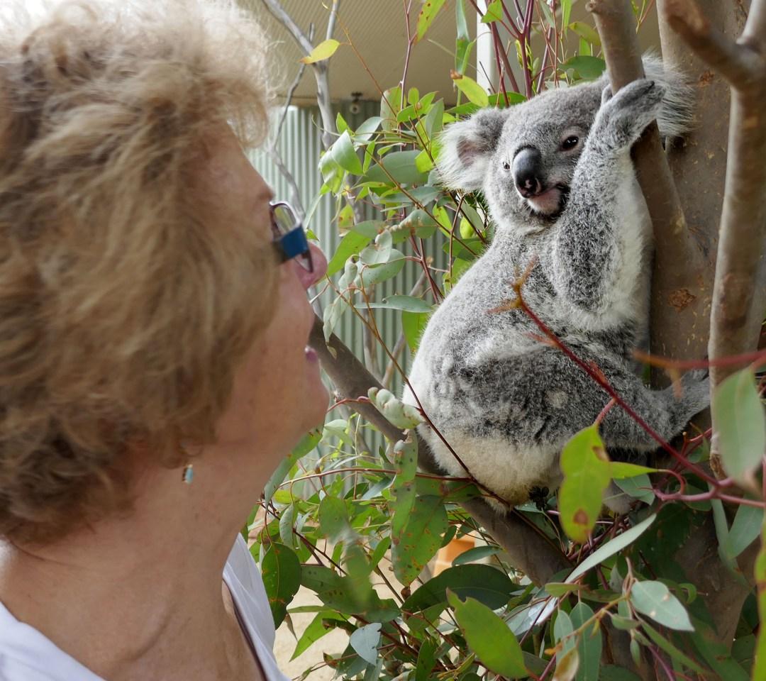 Kolala at Sydney Wildlife Zoo for boomervoice