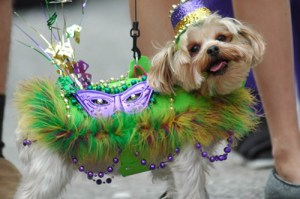 The Krewe des Chiens (Krewe of Dogs) holds a popular parade.