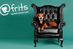 Cape Town's First Dog Hotel atFrits Launches