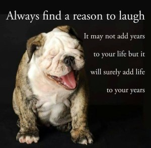 Bulldog and laughter