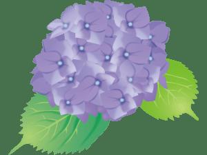 あじさい(紫)