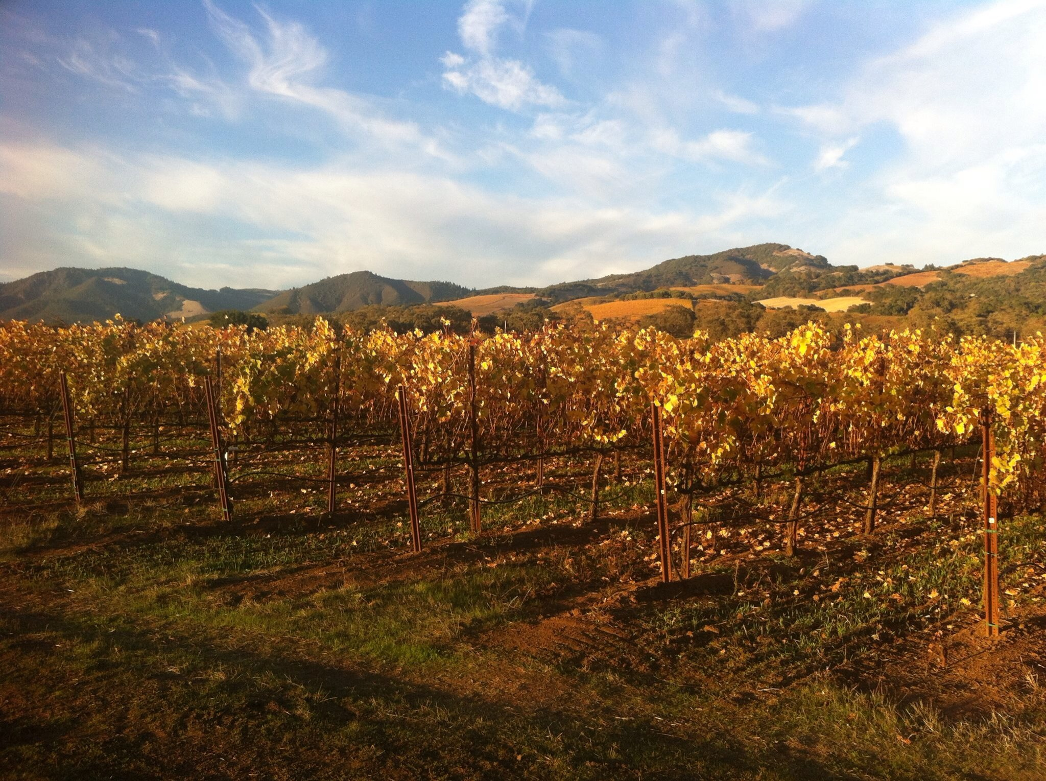 Romantic Fall Colors & the Reason for them: A Look into the Vine Lifecycle