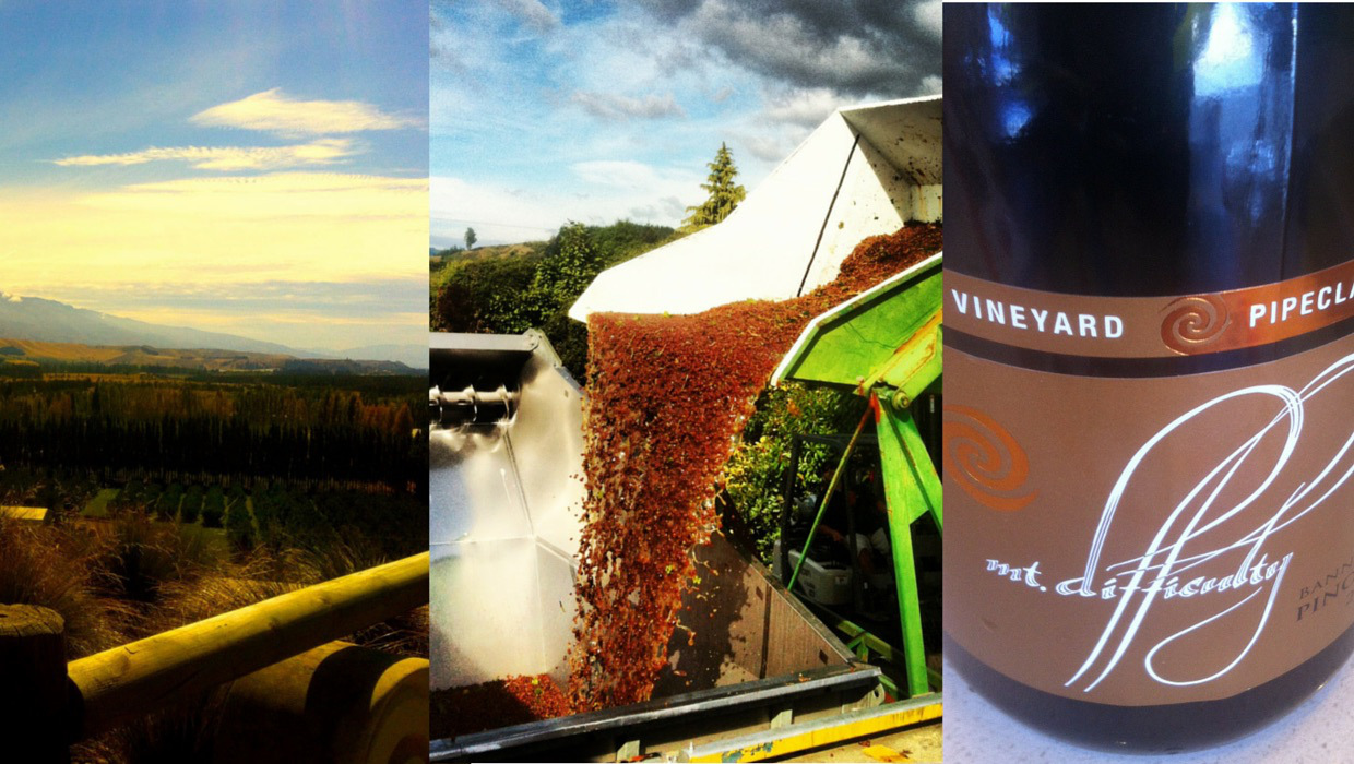 Chasing Verasion: How to Work Wine Harvest in New Zealand