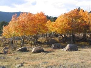 Oct-2006-017