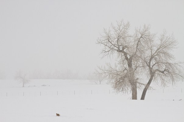 Tree Snow Fog and The Prairie Dog