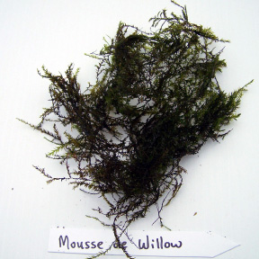 Moussi de Willow