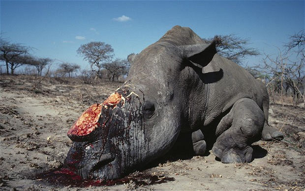 Stop hunting and the money to keep the anti-poaching forces stops resulting in an increase of poaching.