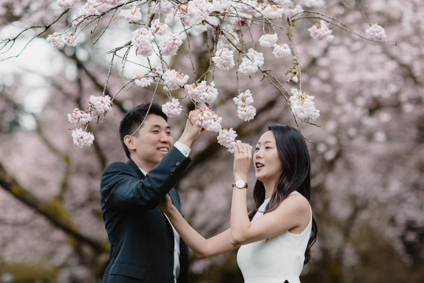 stanley park cherry blossom