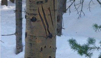 bear claw marks snowmass