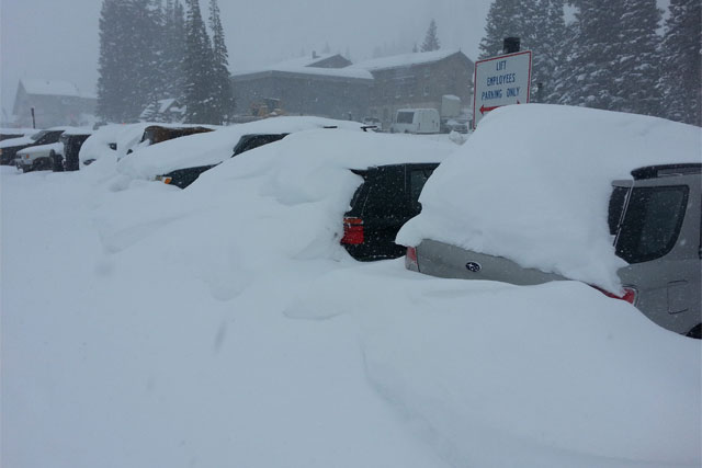 wildcat lot alta