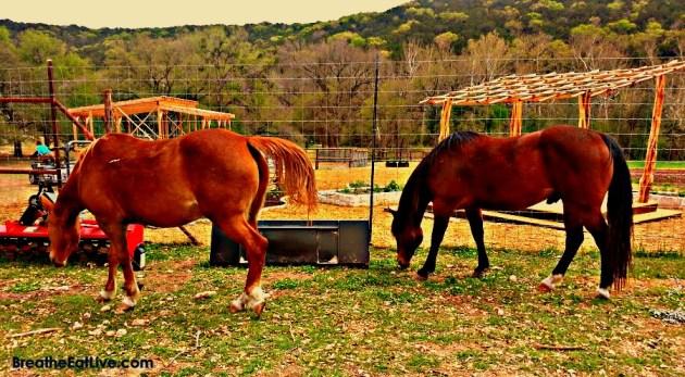 horsebacke