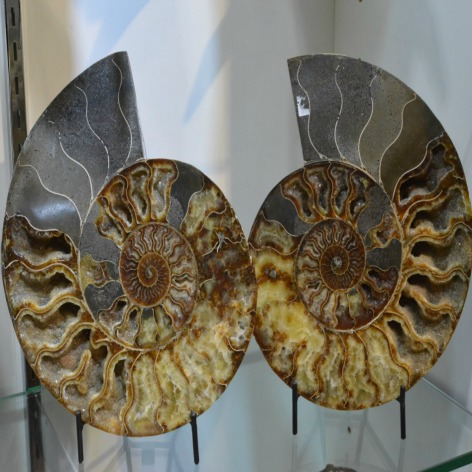 Ammonites from Madagascar