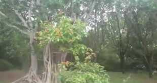 Rav Dror is Doing Hitbodedut in the Jungle
