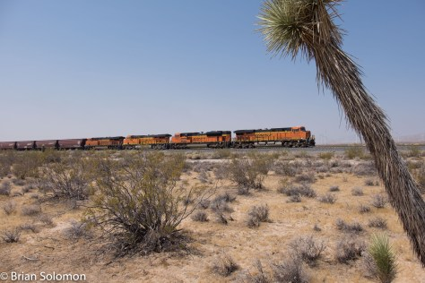 BNSF_earthworm_grain_train_Mojave_w_Joshua_Tree_DSCF0989