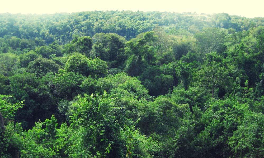 The jungie at Iguazu
