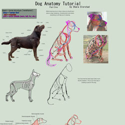 Dog anatomy tutorial
