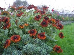 Kilcoan Gardens are ablaze with summer colour