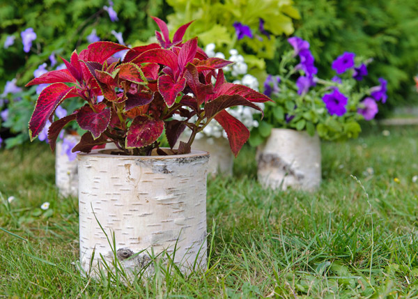 Rustic cottage garden pots and containers