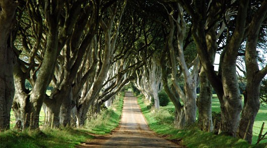 Dark Hedges near Stranocum in County Antrim